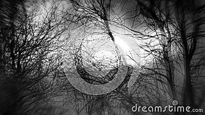 Laço sem emenda da floresta preto e branco assustador filme