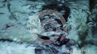 La burbuja de aire para los pescados en acuario emerge con la luz de neón almacen de metraje de vídeo