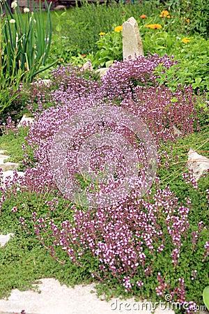 La composizione nel giardino timo di breckland immagine - Composizione giardino ...