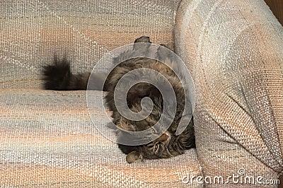 La durée d un chat