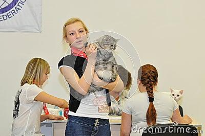 La exposición de gatos Imagen de archivo editorial