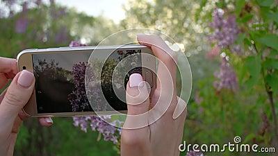 La femmina prende le foto del lillà di fioritura facendo uso dello smartphone nel bello giardino della molla stock footage