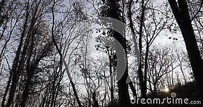 La forêt effrayante avant le crépuscule banque de vidéos