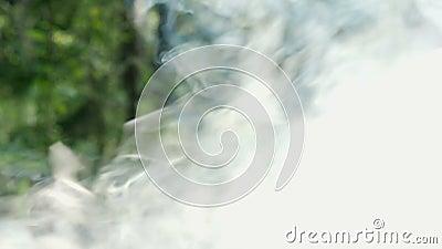 La fumée du feu dans la forêt clips vidéos
