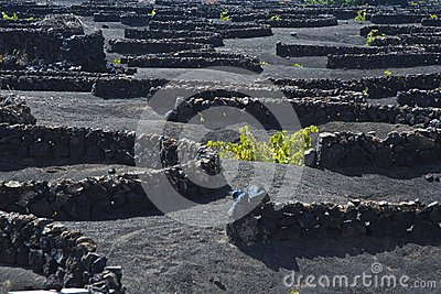 La Geria - vineyard region of Lanzarote