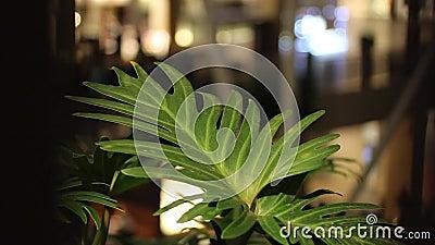La hoja verde de la flor se mueve en el viento, siluetas borrosas de la gente que camina en el fondo Alameda de compras metrajes