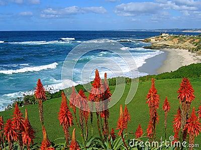 La Jolla coast, California, with red succulents
