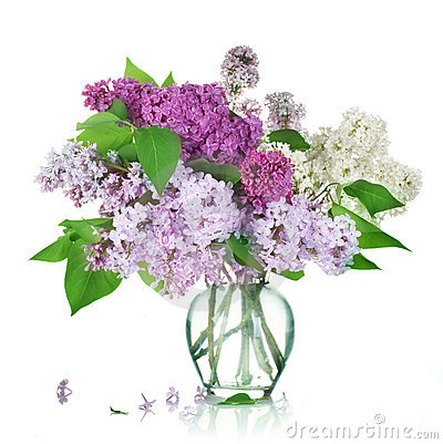 La lila florece el ramo