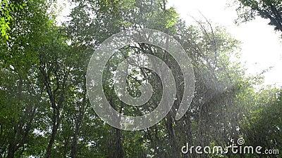 La luz de Sun brilla a través de selva tropical en parque tropical exótico salvaje con descensos en la lente almacen de video