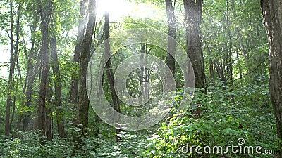 La luz positiva del sol brilla a través de selva tropical en parque tropical exótico salvaje con la llamarada y la mudanza de la  almacen de video