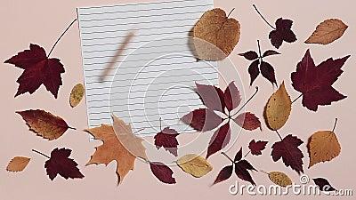 La matita sta rotolando su un foglio di carta allineato e si sta fermando Sfondo rosa con foglie autunnali colorate Concetto di r stock footage