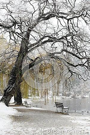 La neige a couvert le lac et le banc