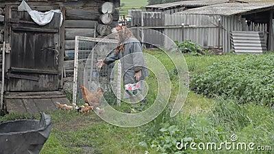 La nonna anziana cammina un pollo eterogeneo con i piccoli polli video d archivio