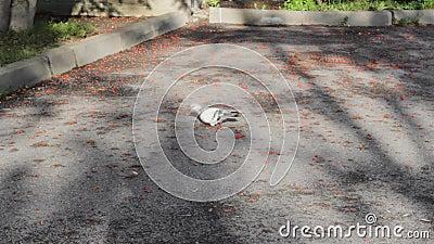 La paloma rumana come la fauna silvestre de los árboles metrajes