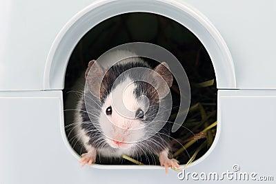 La petite souris sortant de lui est trou
