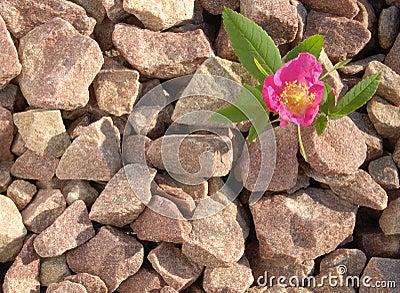 La piedra y se levantó