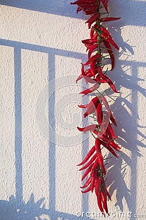 La pimienta roja amarga rechaza una sombra