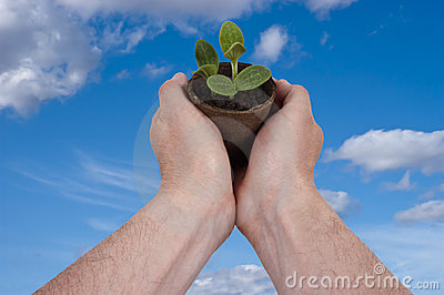 La planta, plantando, jardín, cultivando un huerto crece creciente
