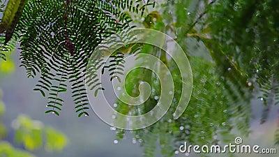 La pluie tombe sur la feuille composée, mouvement lent clips vidéos
