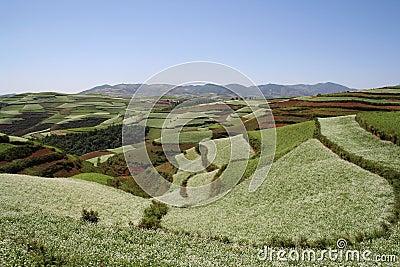 Le sol rouge de Dongchuan