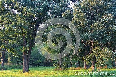 La savane de chêne de l Illinois