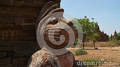 La statue de la tête d'un animal clips vidéos