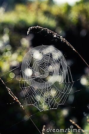 Toile d araignée