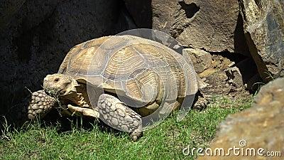La tortue s'y déplace banque de vidéos