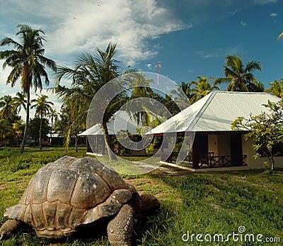 La tortuga más vieja del mundo en la isla del tesoro