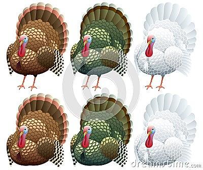 La Turchia