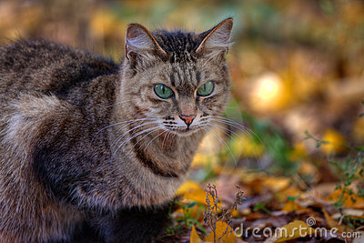 La verticale de chat de Tabby en automne