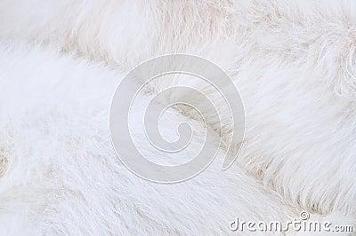 Laag van hond