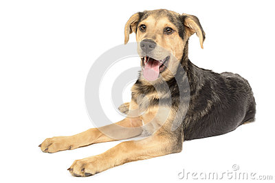 More similar stock images of ` Labrador Dachshund Puppy Mix `