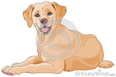 Labrador Vector Illustration
