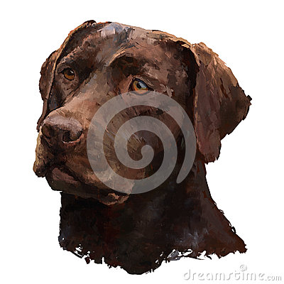 Free Labrador Oil Painting Royalty Free Stock Image - 32057506