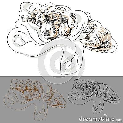 Labrador Puppy Sleeping in a Blanket