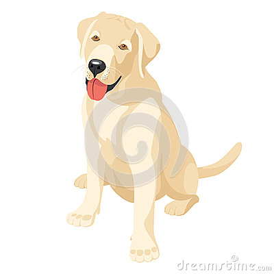 Labrador (retriever)
