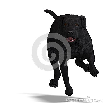 Labrador Retriever Dog. 3D rendering with