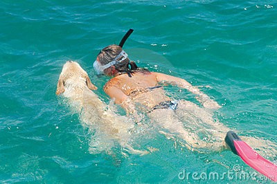 Labrador retriever swimming with woman