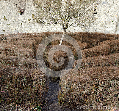 Free Labyrinth With Leafless Bushes And A Tree Royalty Free Stock Photography - 52847927
