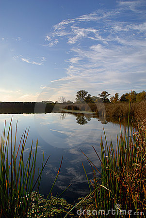 Free Lacy Clouds Reflected In Pond Royalty Free Stock Photos - 3643998
