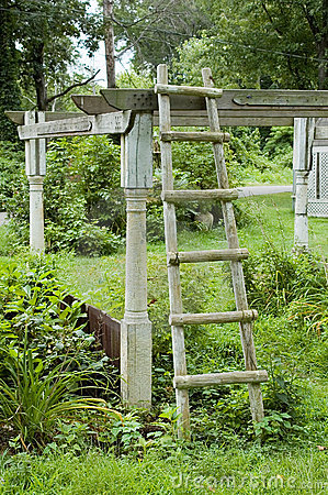 Ladder in Garden