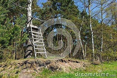 Ladder stand at a birch