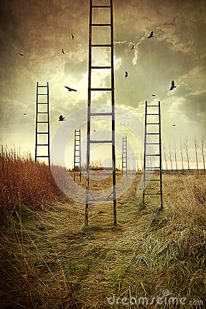 Free Ladders Reaching To The Sky In A Field Stock Photo - 24798380
