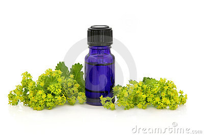 Ladies Mantle Herb Therapy
