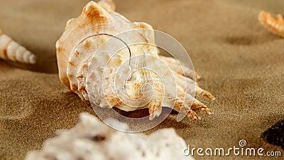 Lado da estrela do mar diferente do shellsand do mar na praia video estoque