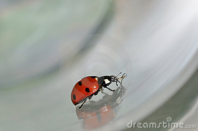 Lady bird bug moving on conceptual grey background