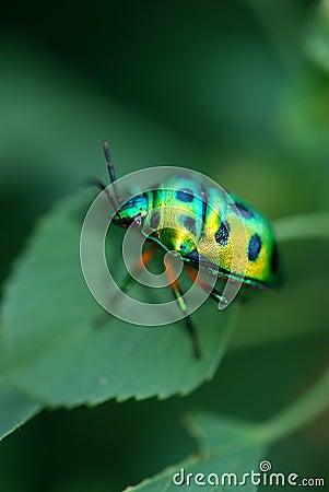 Free Lady Bug Stock Photo - 3392510