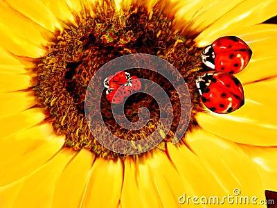 Lady bug family