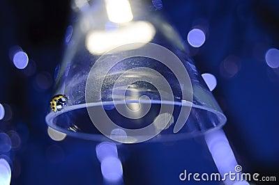 Lady bug on glass